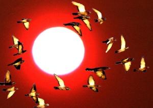birdflying1