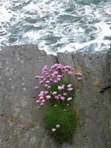 floweronthecliff