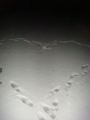 heartprints1