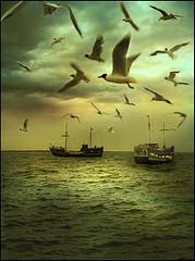 shipandsea