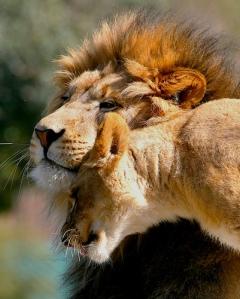 love-gentleness1