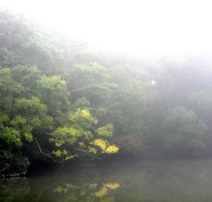 nature8