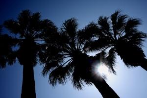 palms-silhouette