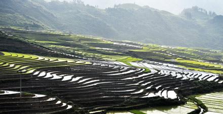 Ruộng bậc thang mùa cấy lúa, miền núi Bắc Việt Nam