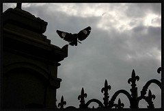 flighttofreedom
