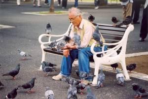 Chim bồ câu ở Nhật