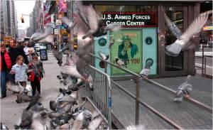 Bồ câu ở New York