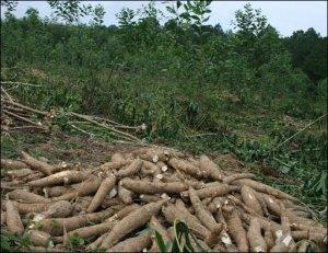 regrowforest_khoaimi
