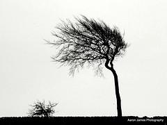 treeinthewwind