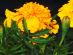 vantho-merigold