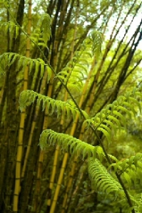 Copy of fern-bamboo