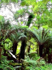 Copy of tree-fern