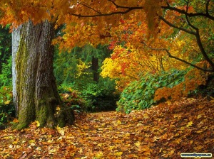 fall-of-autumn-leaves-