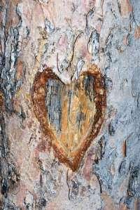 heartcarvedintotree