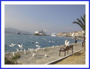 pigeons_at__port_