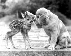 puppy-fawn