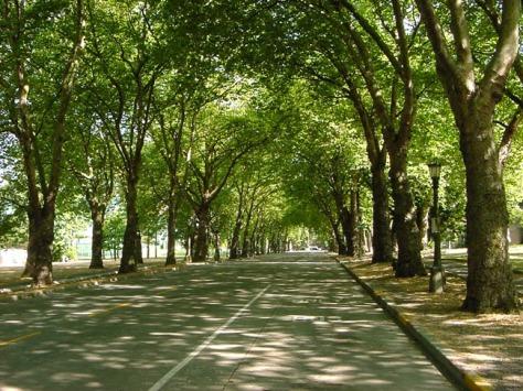 trees[1]