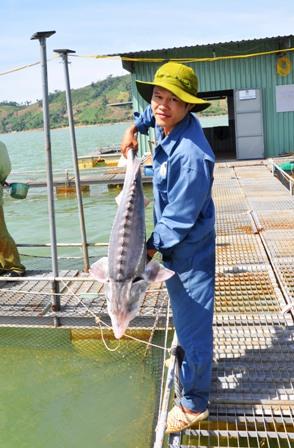 Kỹ sư Thìn với con cá thích đùa