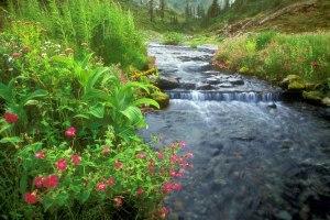 beautiful nature (50)