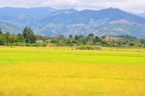 Đồng lúa trên cao nguyên