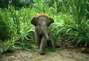 Baby-Animal-2