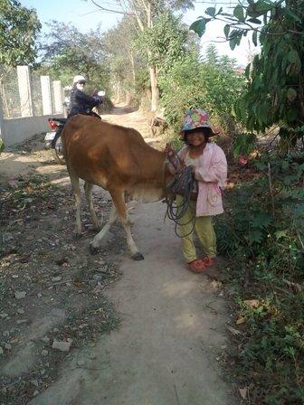 Khi em đứng lại, con bò không còn bị em lôi đi nên nó thoải mái nhởn nhơ gặm cỏ hai bên đường phía sau lưng em - Ảnh: Matta Xuân Lành