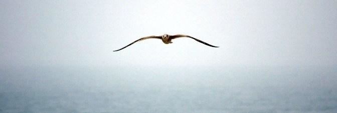 Loài chim của Con đường đến Thượng đế