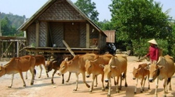 Buôn bán trâu bò