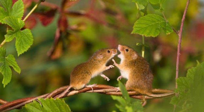 Những con chuột tối thứ Bảy