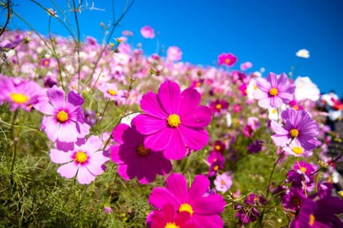 Spring time – Yiruma