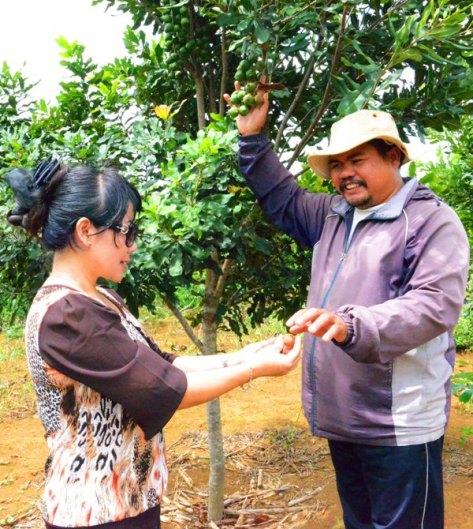 Ông Y Then quản vườn hướng dẫn phóng viên cách phân biệt độ già của quả