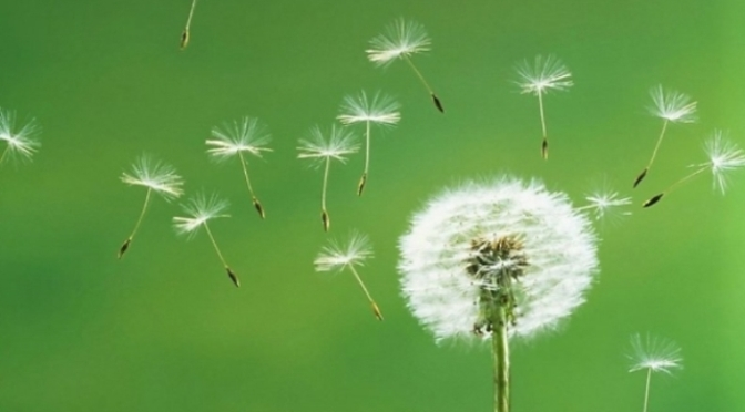 Sự tiếp nối hạnh phúc – Happy Continuation