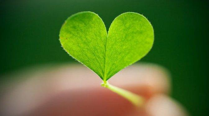 Để yêu một người – To love somebody