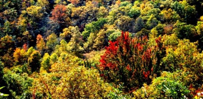 Sắc Thu trên dãy Appalachian
