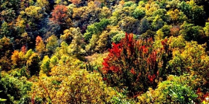 Sắc Thu trên dãy Appalachian 2014