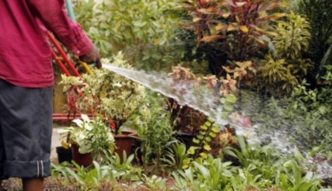 garderner-watering-plants