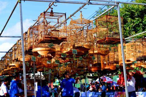 Gần 400 ca sĩ chim dự thi'