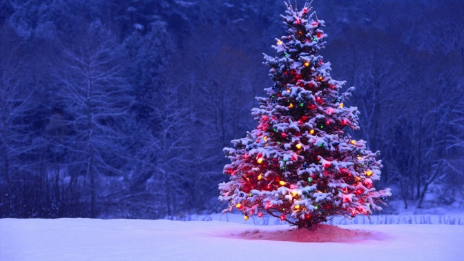 Sự tích cây Noel