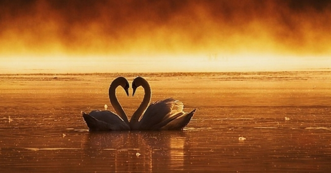 Love doesn't ask why – Tình yêu không hỏi tại sao