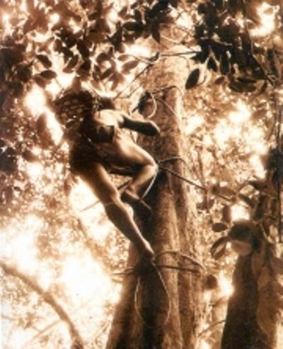 Người Chứt (nhóm Rục) có kỹ thuật trèo cây nổi tiếng để lấy mật ở các tổ ong trên cây cao. Họ leo thang bằng dây mây. Mỗi nấc thang là một vòng dây buộc vào thân cây, có chỗ đặt bàn chân. Leo đến đâu, buộc vòng thang đến đó.
