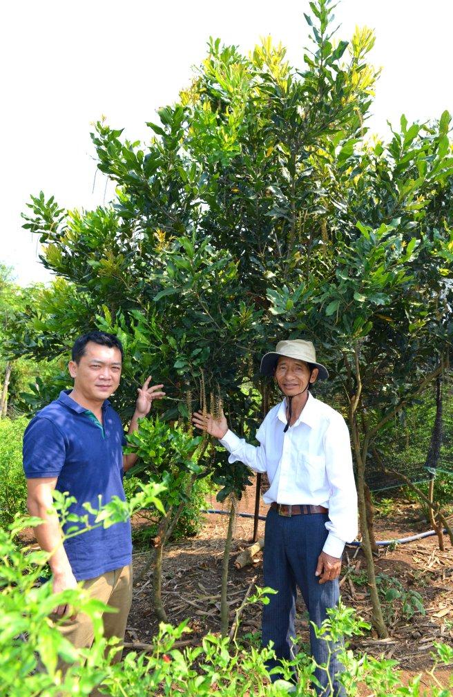Hoàng Tùng, ông Nghiêm với cây mắc ca trồng xen ớt trong vườn