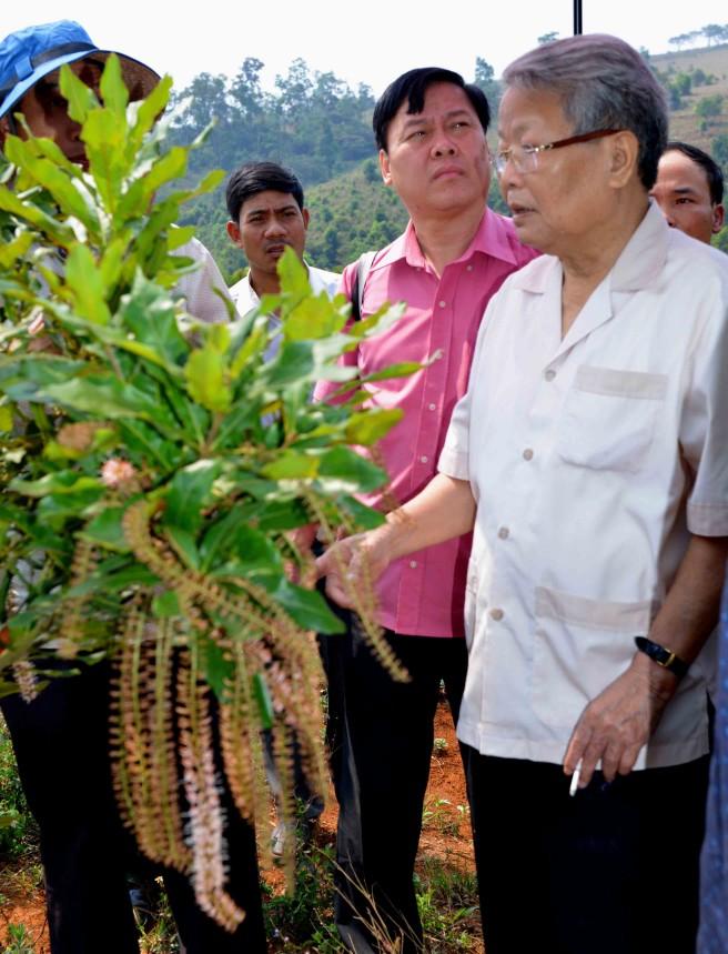 Nguyên Chủ tịch Nước Trần Đức Lương ngắm cây mắc ca trồng mới năm thứ 2 đã trổ hoa ở Tuy Đức