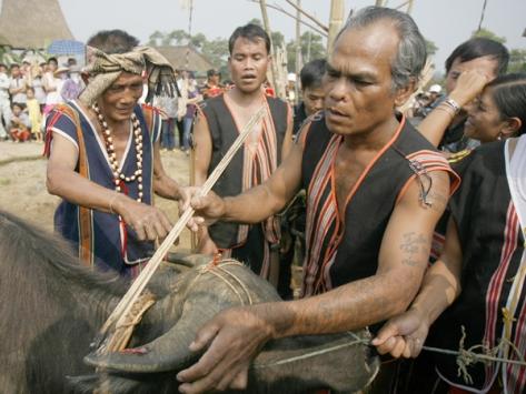 Lễ dâng trâu của dân tộc K'Ho.