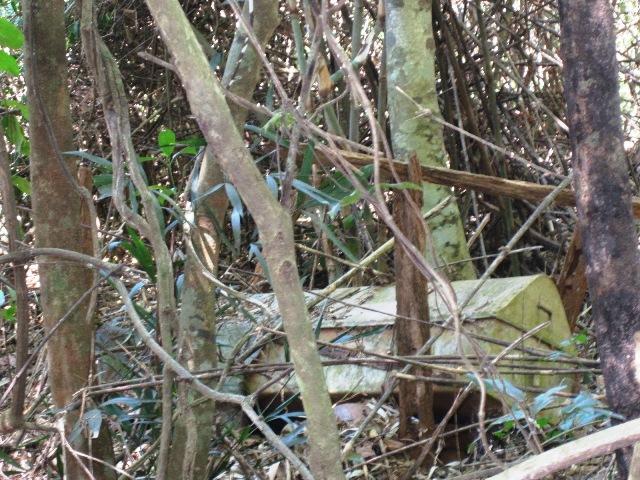 Một cỗ quan tài trong khu rừng ma.