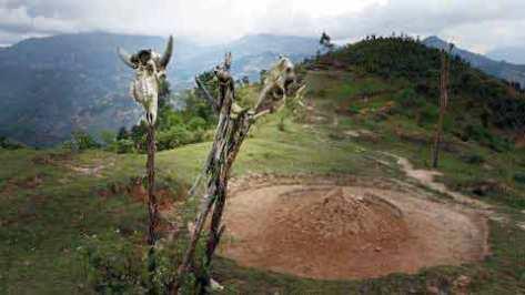 Đầu trâu được cắm trên cọc chôn trước mộ của người chết, phong tục của người La Chí.