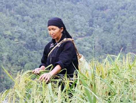 Mẹ lúa rước hồn lúa về nhà để cầu mong một năm mùa màng bội thu.