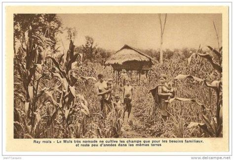 Gia đình người Mạ đang thu hoạch thời Pháp thuộc.