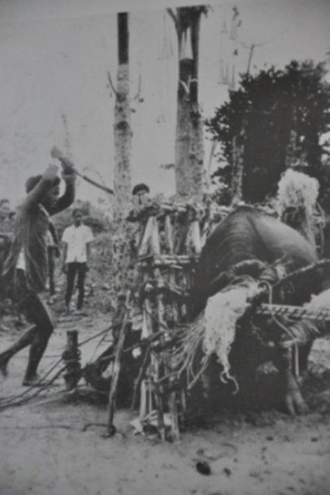 Mọi sinh hoạt, văn hóa, lễ hội của người M'nông Gar đều được Codominas ghi chép và chụp lại.