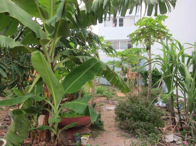 Chuyện vườn rau trong khu phố