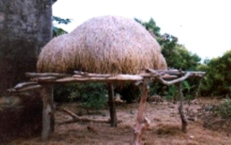 Người Ngái giữ các cây rơm trên dàn cao để tránh mối mục và gia súc phá hoại. (ảnh KT)